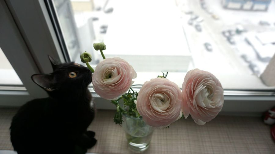 Flower Nature Flower Head Blossom Beauty In Nature Close-up Domestic Cat Cats Of EyeEm Flower Arrangement Bouquet Pink Color Plant Leaf Freshness Pale Pink Peony Flower Domestic Animals Animal Themes BLackCat Black Color Cat Pets Blooming No People Ranunculus
