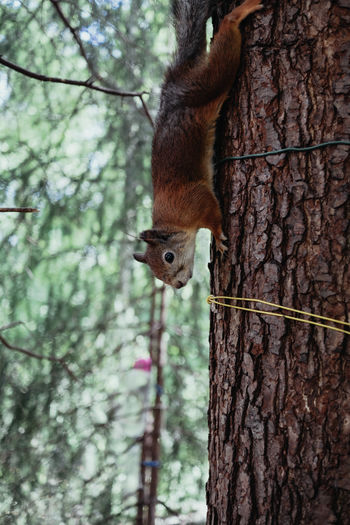Squirrel Travel Animal Themes Animal Wildlife Animals In The Wild Bird Bird Feeder Close-up Day Focus On Foreground Hanging Mammal Nature No People One Animal Outdoors Perching Red Panda Squirrel Travel Destinations Tree Tree Trunk Woodpecker