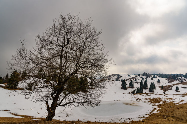 Erve Erve Miozzo Photo Miozzo Snowcapped Mountain Landscape Environment Non-urban Scene Nature Tranquil Scene Beauty In Nature Tranquility Cloud - Sky Bare Tree Tree Sky Scenics - Nature Snow Winter Cold Temperature Plant No People Covering Land