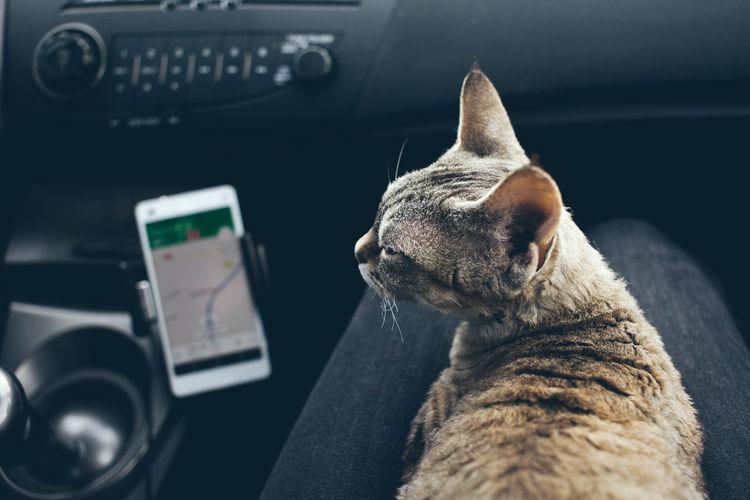 Close-up of a cat looking at car