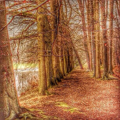 Barneveld Schaffelaarsebos Trees Fall leaves