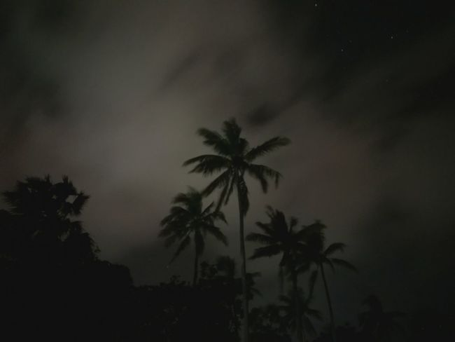 Palm Tree Tree Nature No People Outdoors Night Trees Sky Clouds Night Sky Stars Coconut Trees Night At Beach Still Life Moving Clouds Clouds And Sky In Background Fine Art Line Of Trees Beauty In Nature Low Light Dark Beach Scenics Moonlit Tropical