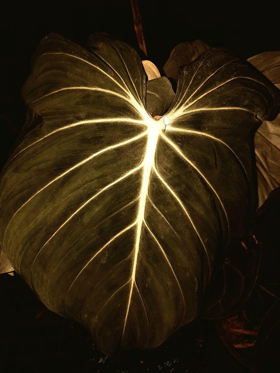 CLOSE-UP OF ILLUMINATED LIGHT PAINTING
