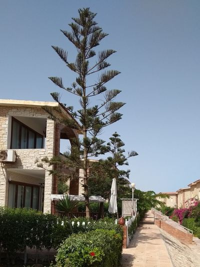 Tree, North coast, Egypt Tree Clear Sky Sky Architecture Plant Building Exterior Built Structure