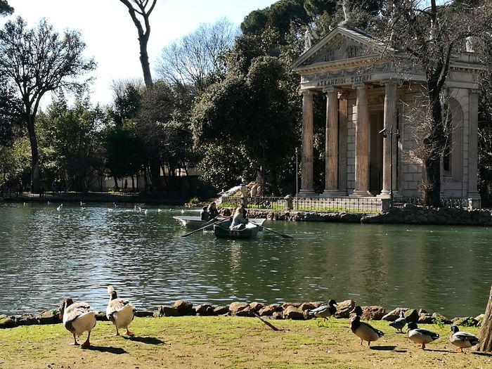 Water Animal Themes Outdoors Nature Building Exterior Bird Tree Ducks Sunlight