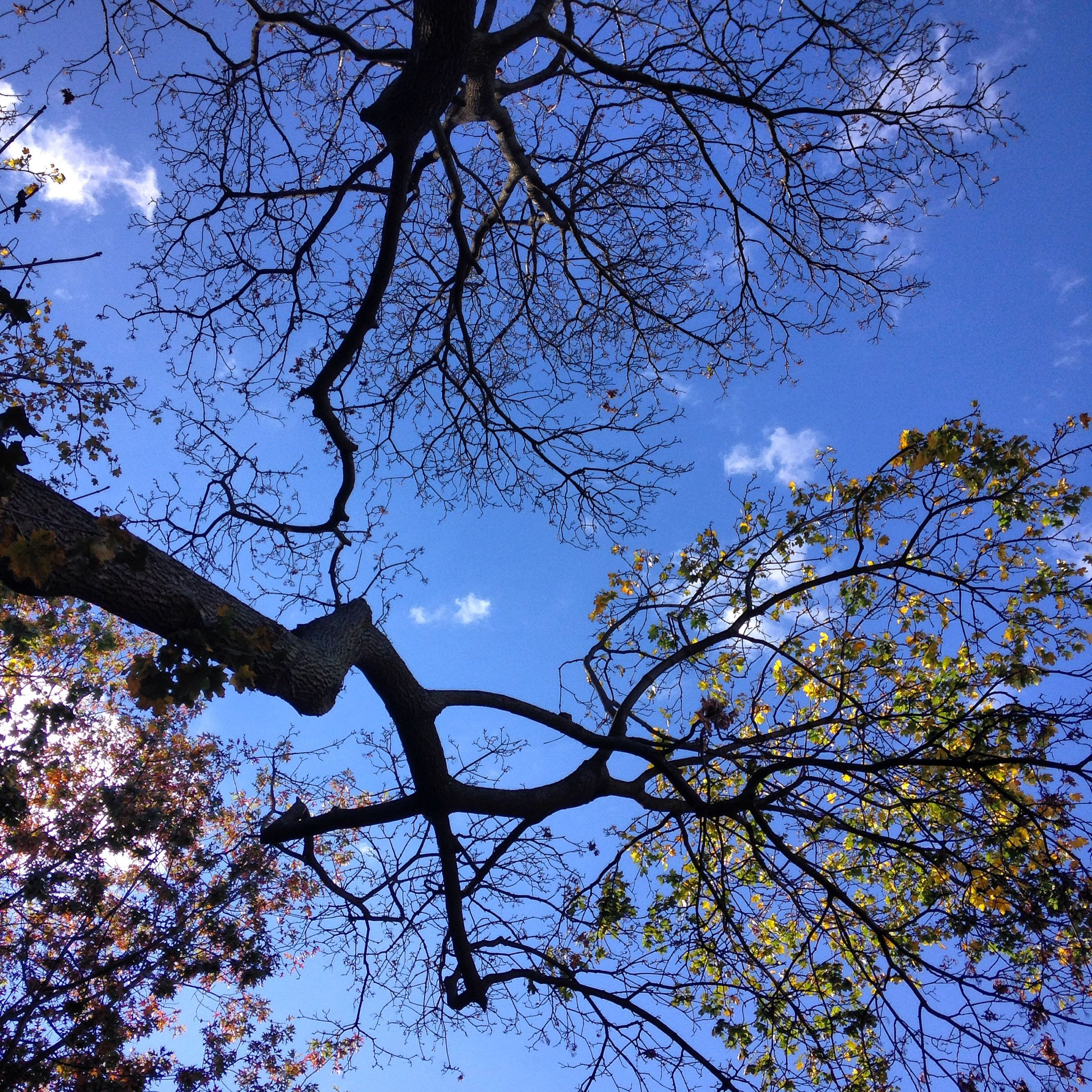 low angle view, branch, tree, sky, growth, nature, beauty in nature, tranquility, bare tree, blue, scenics, silhouette, high section, outdoors, cloud - sky, no people, day, clear sky, cloud, sunlight