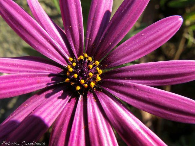 Flowers,Plants & Garden Pollinedeifiori