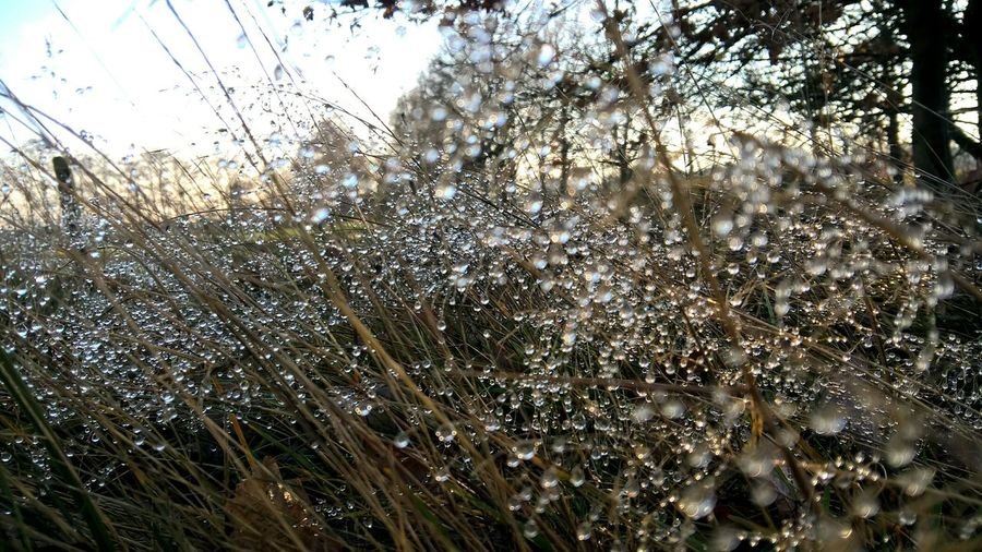 Waterdrops Nature Photography The Purist (no Edit, No Filter) Mother Nature Is Amazing