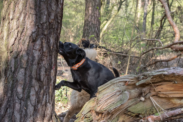 Dog sitting on tree trunk in forest