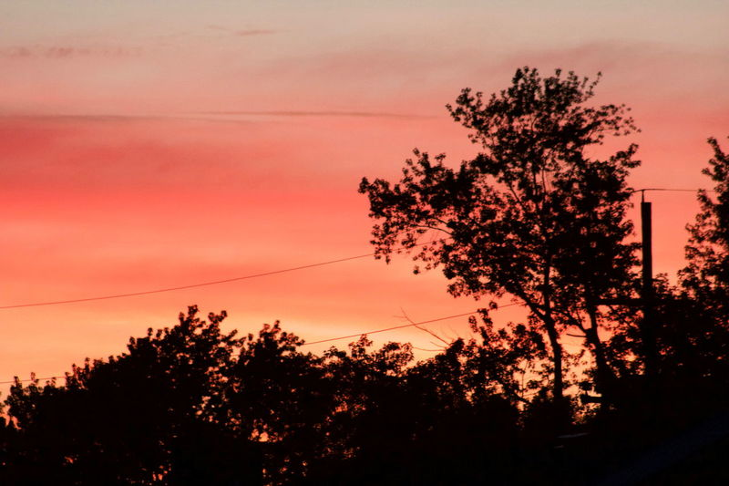 Sunsets for days EyeEm Gallery EyeEm Sunset Sky Scenics Tranquil Scene Pink Sky Sunset Silhouettes Sunsetporn Pink Sunset Trees TreePorn Powerlines Telephone Lines Showcase July