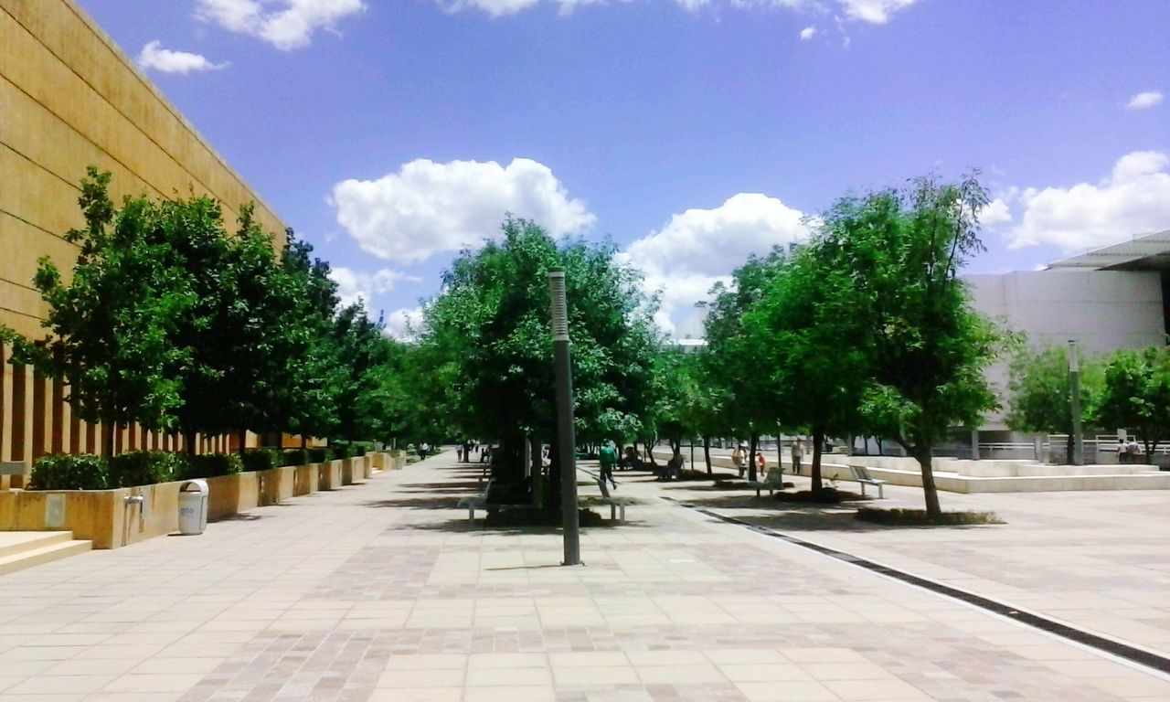 sky, tree, cloud - sky, architecture, built structure, outdoors, day, building exterior, no people, statue, sculpture, nature