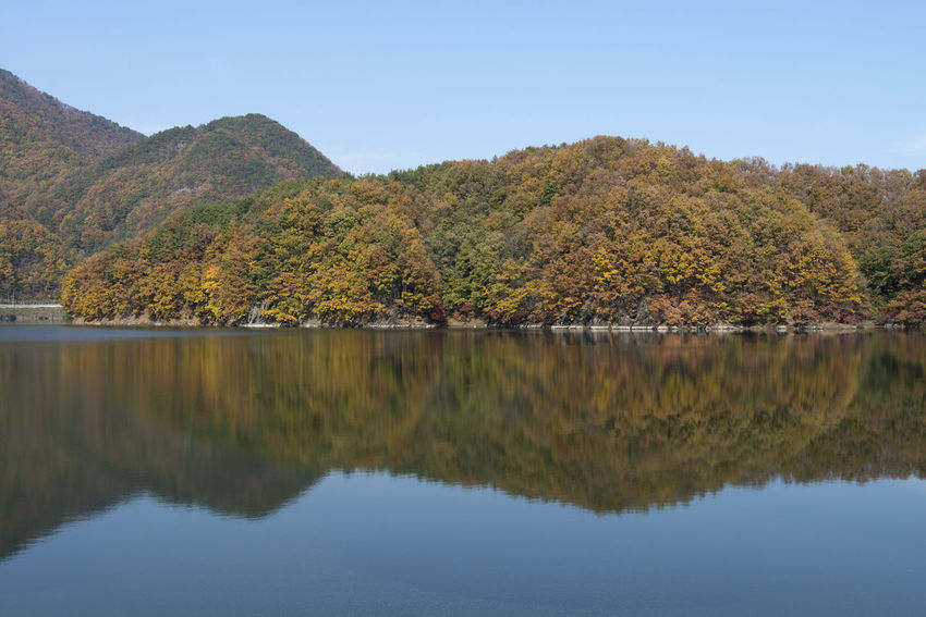autumn landscape of Busodamak, a beautiful lake located in Okcheon, Chungbuk, South Korea Autumn Autumn Colors Busodamak Fall Beauty Morning Light Okcheon Autumn Beauty In Nature Clear Sky Day Idyllic Lake Lake In Autumn Lake In The Morning Landscape Mountain Mountain Range Nature No People Non-urban Scene Outdoors Reflection Scenics Sky Standing Water Tranquil Scene Tranquility Tree Water Waterfront