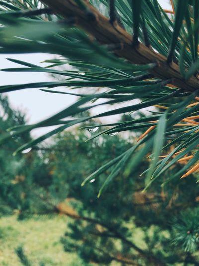 Drops 💧 IPS2016Nature Close-up Macro Drops Nature EyeEm Nature Lover