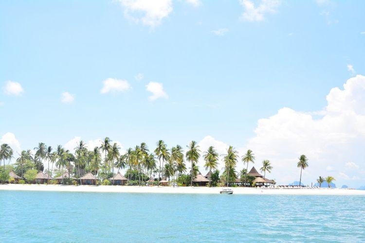 Sky Sea Palm