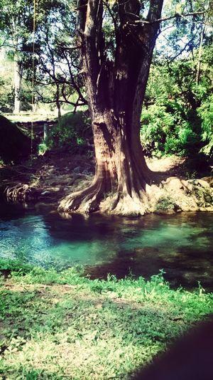 El Paraiso Rio Arboles Bosque Y Vida