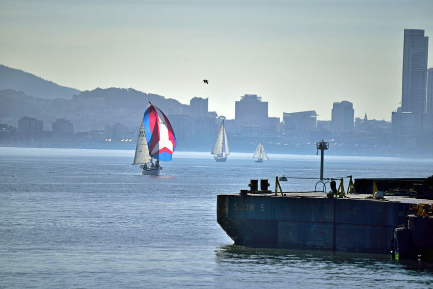 Sailing At Middle Harbor 10 Port Of Oakland, Ca Middle Harbor Sailing Sailboats Cityscape San Francisco Skyline Waterfront♥ Hills Of San Francisco The Color Of Sport Open Sails Sailing The Bay San Francisco Bay People On Board Enjoying Life Leisure Activity Channel Marker Dredging Platform Harbor Bayview Office Buildings Marina Landscape_Collection Landscape Photography Water Urban Skyline Architecture
