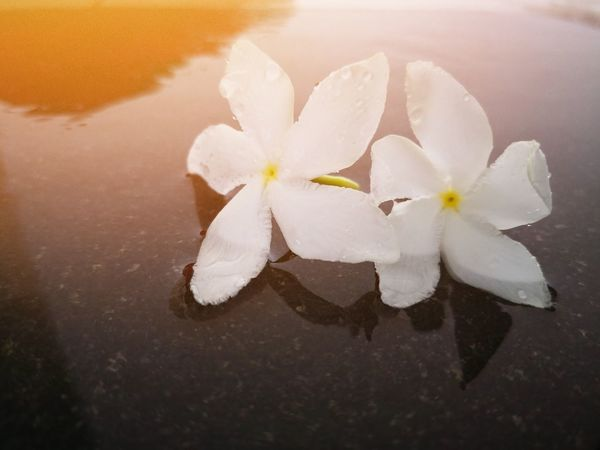 Flower Water Beach Flower Head Salt - Mineral Lake Winter White Color Close-up Sky Frangipani Water Pump Traditional Windmill Wind Power Industrial Windmill Wind Turbine Alternative Energy Windmill Sustainable Resources Turbine Environmental Conservation Solar Panel Solar Power Station Solar Equipment Sustainable Lifestyle Propeller Renewable Energy Fuel And Power Generation Hydroelectric Power Environmentalist
