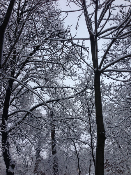 branches of trees in winter season Beauty In Nature Branch Branch Of A Tree Branches Nature Outdoors Snow Branches Tree Tree Tree In Snow