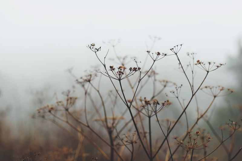 Misty Fog EyeEmNewHere Nature Delicate Beauty Quiet Quietly Peace Outdoors Ethereal Fragility Fairytale  Flower Flowers Wintertime Cold Filter DSLR Visual Dreams Magic Soft Focus Dof Air