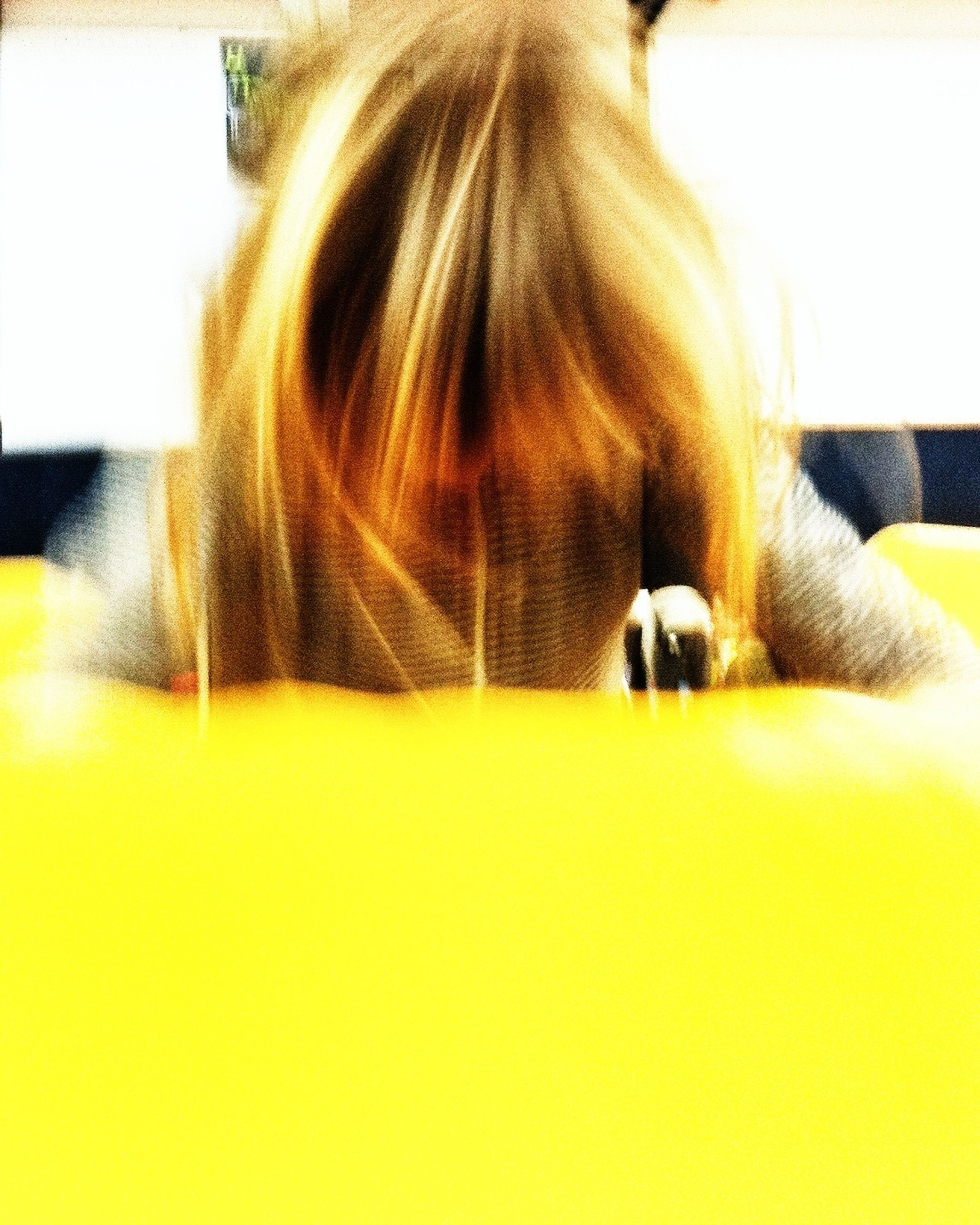 indoors, yellow, domestic animals, long hair, pets, rear view, relaxation, close-up, home interior, side view, blond hair, animal hair, one animal, human hair, copy space, brown hair, mammal, person