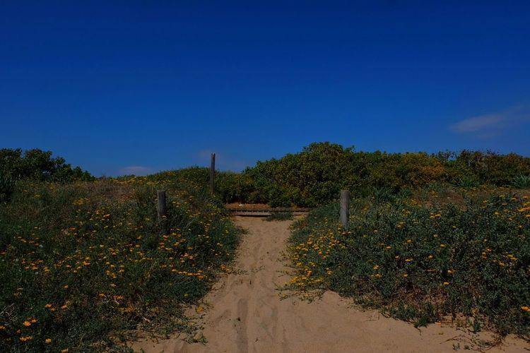 Fujifilm X T10 FUJIFILM X-T10 primavera Sky Blue Bluesky Blue Sky Flowers Life Goodlife Cielo Cel Azul Flores Vida Buenavida Playa Beach Beachlife Beach Life Beachphotography