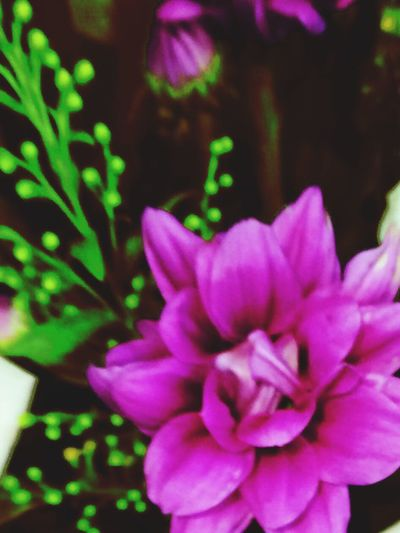 Eye Em Best Shots - Nature EyeEm Nature Lover Flower Collection Loving Flowers