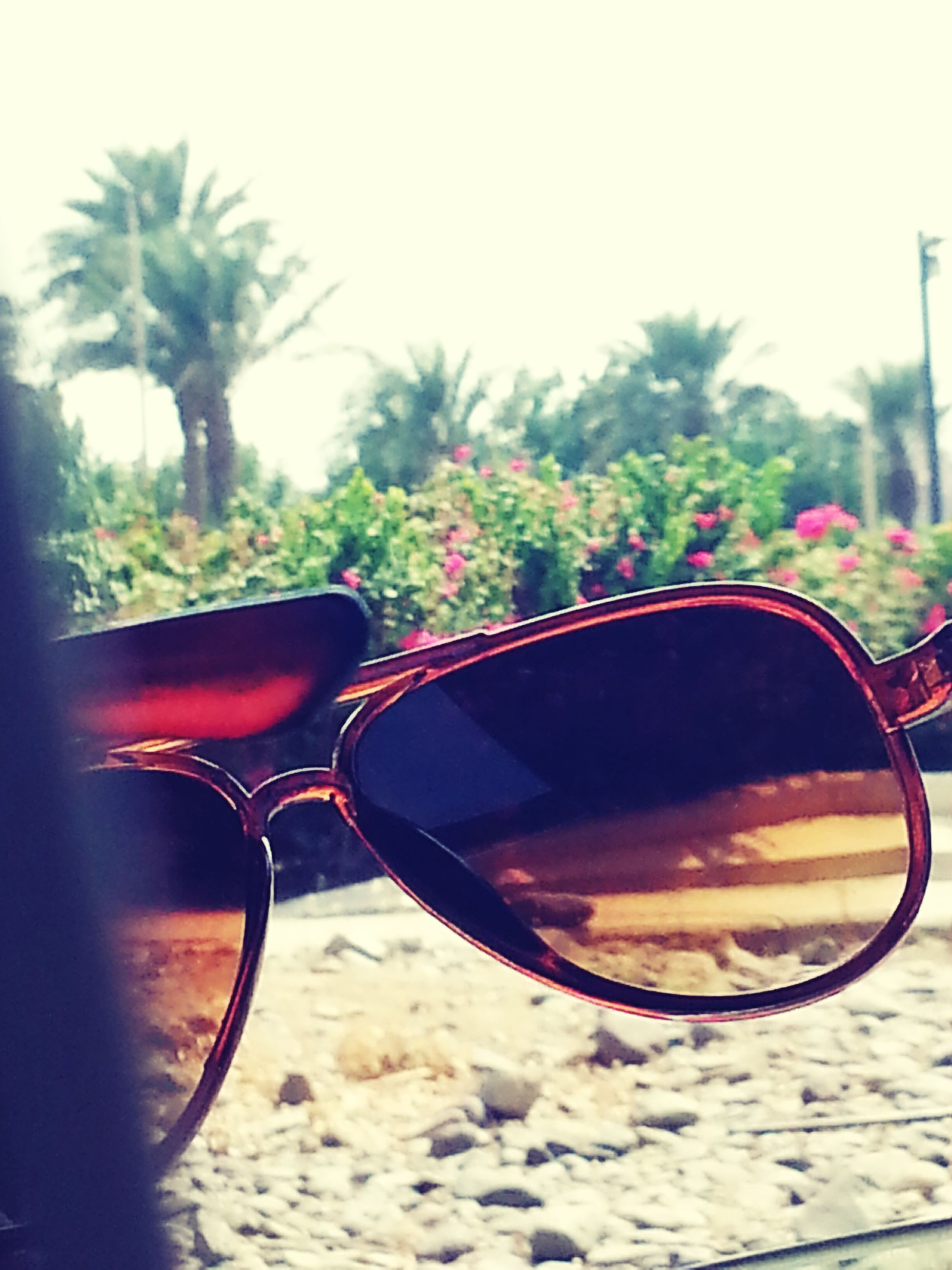 sunglasses, close-up, tree, potted plant, plant, growth, focus on foreground, sunlight, day, clear sky, no people, nature, outdoors, sky, reflection, transportation, land vehicle, table, red, selective focus