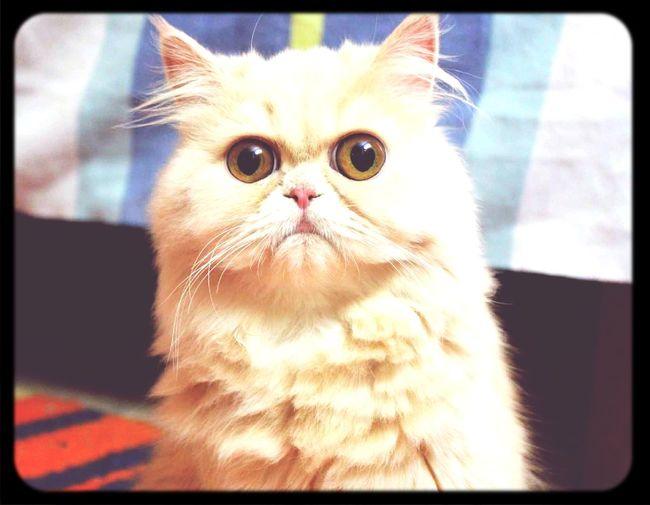 My lovely cat