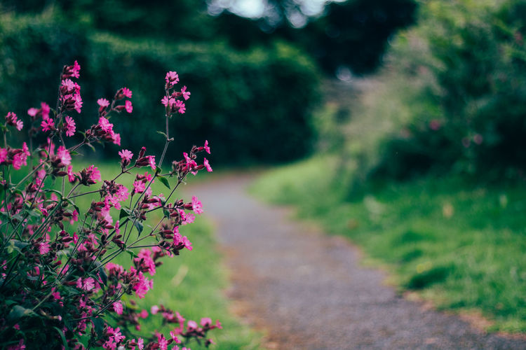 Beauty In Nature Close-up Day Field Flower Flower Head Focus On Foreground Fragility Freshness Grass Growth Leaf Nature No People Outdoors Pink Color Plant Tranquility Tree