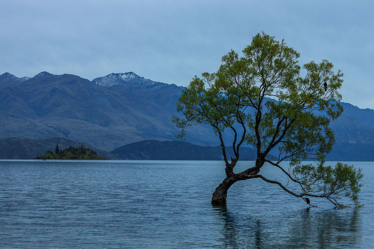 The Wanaka tree Wanaka Beauty In Nature Branch Day Lake Landscape Lone Mountain Mountain Range Nature No People Outdoors Scenics Sky Tranquil Scene Tranquility Tree Wanaka Tree Wanakalake Water Waterfront