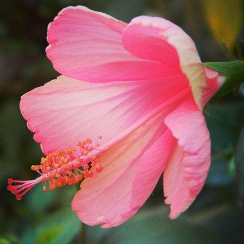 Flowersgarden Nature Flowers Beauty germanvillage instagram like garden beautiful cute chiba me 花 spring pink natureart greenwhich landscape green roses flowersfield iphonesia instanusantara clouds mumbai india