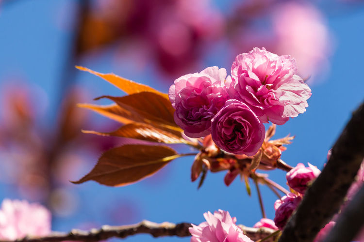 pink blossom Beauty In Nature Pink Color Growth Nature Freshness No People Outdoors Inflorescence EyeEm Nature Lover EyeEm Blossom Flower Head Fragility Plant