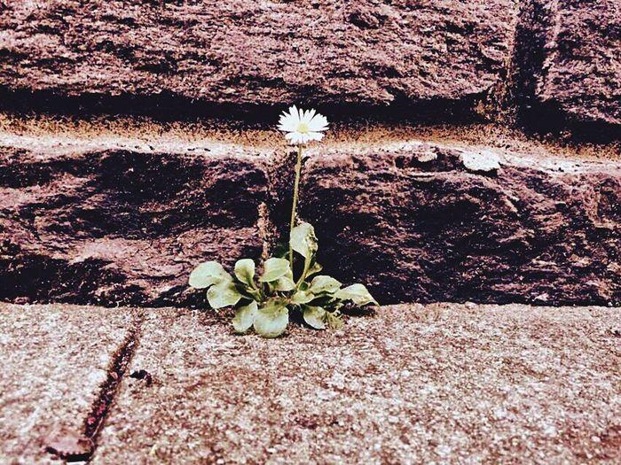 Flower Nature Fragility