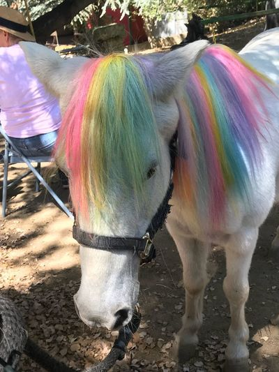 Pony rides...