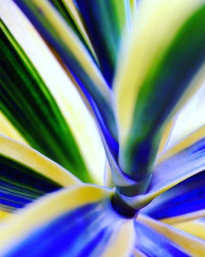 Stem of a Leafy plant Leaves A little blue&purple color in the mix =) 3) Tv_depthoffield 4) Nature_brilliance 5) Fotofanatics_nature_ 6) Natureandlife 7) Rsa_nature 8) Dof_addicts 9) Tgif_nature 0) Nature_brilliance 1) Resourcemag 2) Wms_macro 3) Macro_spotlight 4) Pocket_dof 5) Ig_asylum 6) Ig_addicts_fresh 7) Splendid_dof 8) Macroandflora 9) 1001macro 0) Bns_macro 1) Best_macro 2) Photoflair_macro 3) Loves_united_macro 4) Macro_mood 5) Macro_holic 6) macro_sultans 7) my_daily_macro 8) macro_secrets 9) macroclique 0) my_daily_macro