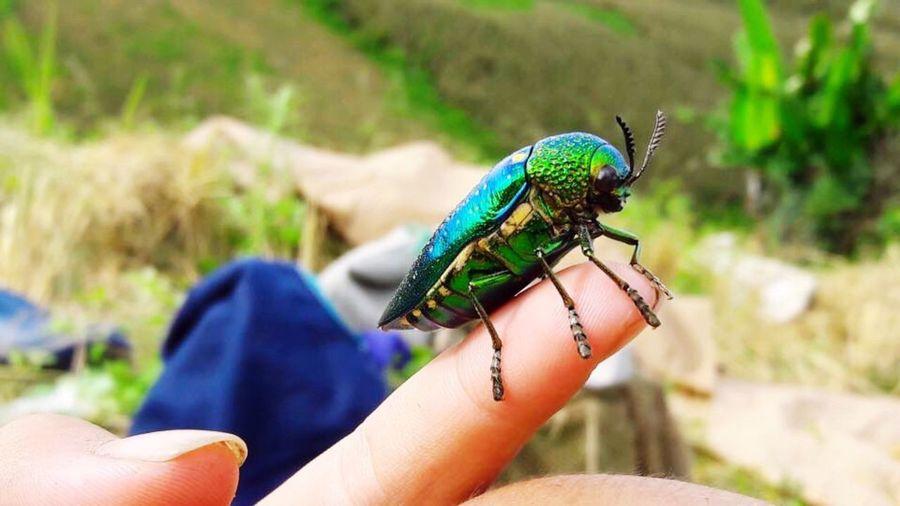 แมลงทับ One Animal Real People Animal Themes Human Hand One Person Focus On Foreground Animals In The Wild Human Body Part Human Finger Lifestyles Holding Day Insect Outdoors Animal Wildlife Close-up Nature Chameleon