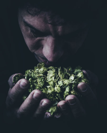 Sensory of hops Beer Brewer Calming Black Background Brewery Close-up Healthy Holding Hop Resin Hops Hops Flower Ingredient Ingredients For Beer Men Nose One Person Sedative Sensory Perception Smell