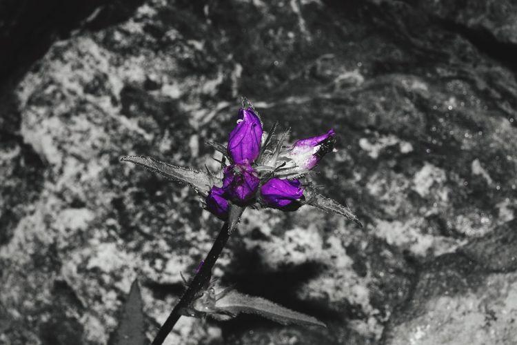 Purpel flower