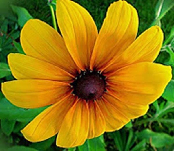 Streamzoo Macroclique StreamzooFlowers Flower