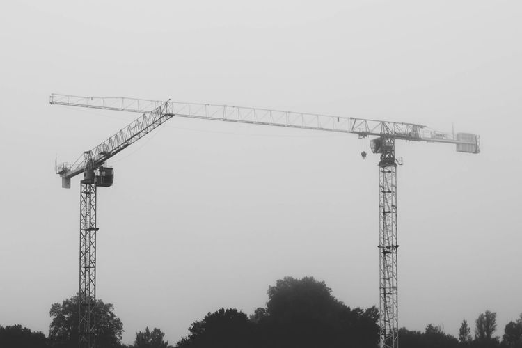 Cranes in the
