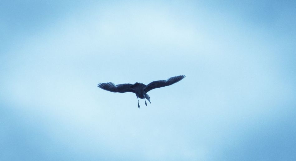 It's A Theme..... Flying Bird Spread Wings Clear Sky Low Angle View