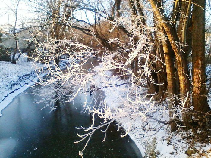 Frozen Winter Trees Snow Ice