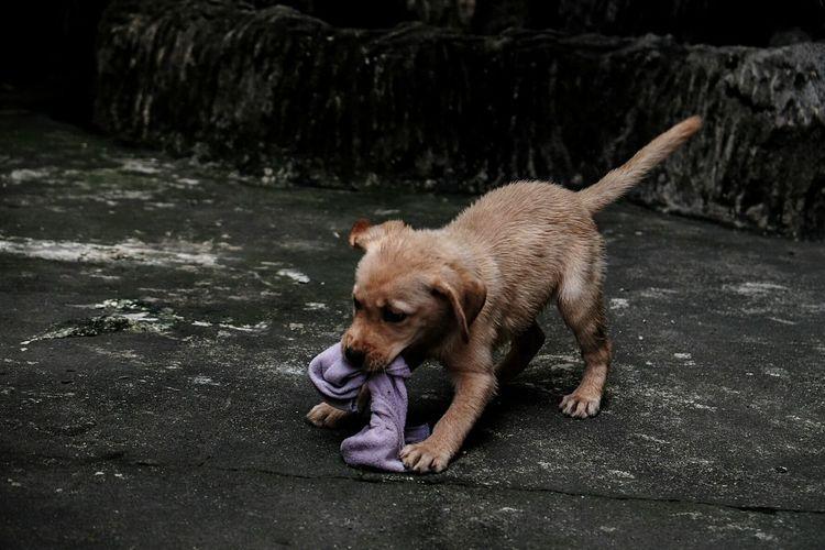 One Animal Animal Dog Animal Themes Pets No People Mammal Nature Outdoors Day Puppy Cute Dog❤ Dogs Of EyeEm Labrador LabradorLove Animal Body Part Dogstagram Doglover Domestic Animals