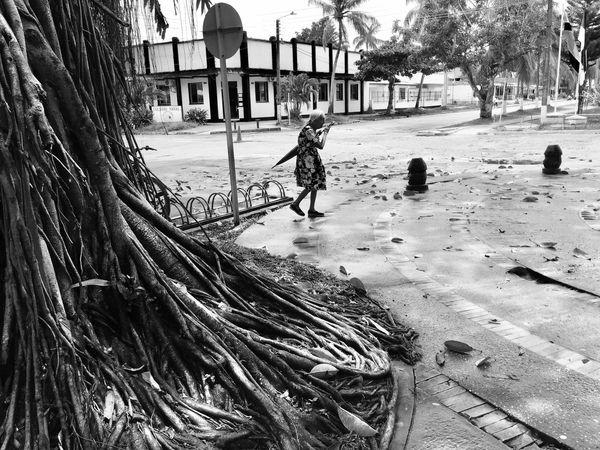 Rainforest Amazonas Tres Fronteras Colombia Leticia Tree Bigtrees Rain Jungle City Umbrella Lady