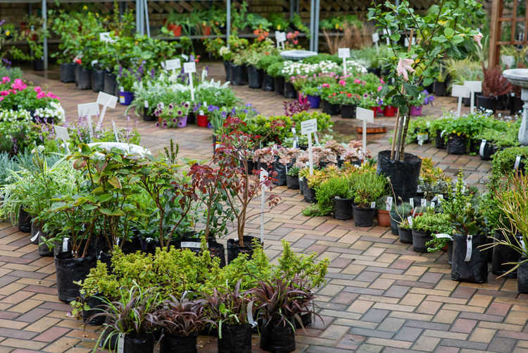 Potted plants on sidewalk