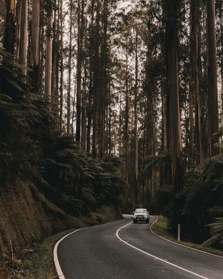 The Black Spur Car Tree Road Transportation No People Outdoors Land Vehicle Nature Beauty In Nature The Great Outdoors - 2017 EyeEm Awards Perspectives Australia Light Light Collection Black Spur The Black Spur Winding Road Forest Woods Golden Hour EyeEm Selects An Eye For Travel