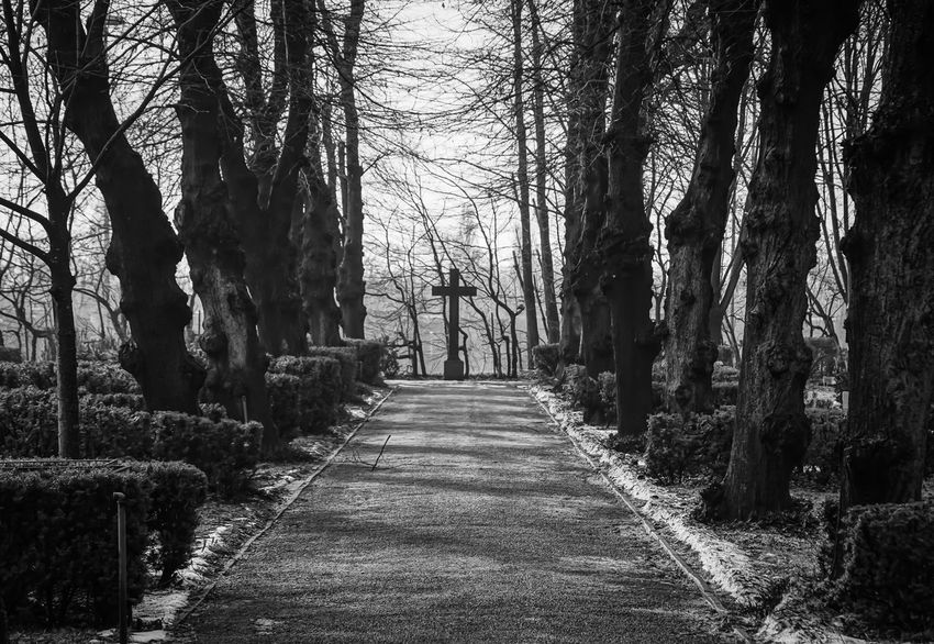 empty way .. Absence Berlin Cemetery Cobblestone Cross Diminishing Perspective Footpath Friedhof Grabstein Gravestone Headstone Kreuz  Leading Long Mystery Narrow Outdoors Perspective Shadow The Way Forward Tree Urban Landscape Urbanphotography Vanishing Point Walking