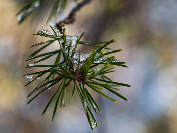 Close-up of raindrops on tree branch