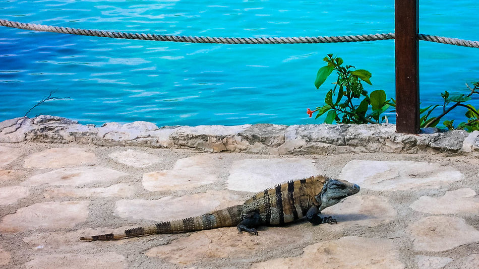 Animal Wildlife Beauty In Nature Blue Day Mammal Nature No People Outdoors Reptile Sky Stripes Everywhere Tranquility Water