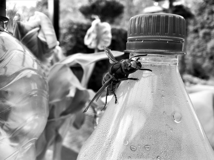 Animal Animal Themes Animal Wildlife Animals In The Wild Bottle Close-up Container Day Focus On Foreground Freshness Glass - Material Hornisse Insect Invertebrate Nature No People One Animal Outdoors Plant Selective Focus Transparent